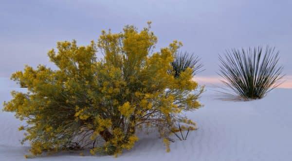 Cactus Bloom-0