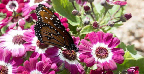 Happy Butterfly-0