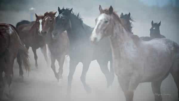 Horses-0